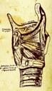 Task Force Ligure di Chirurgia della Tiroide